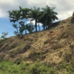sandy bay land for sale