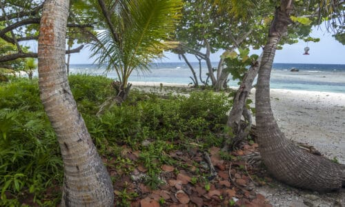 caribe point roatan real estate